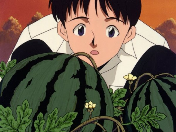 Shinji looks at some watermelons on a vine